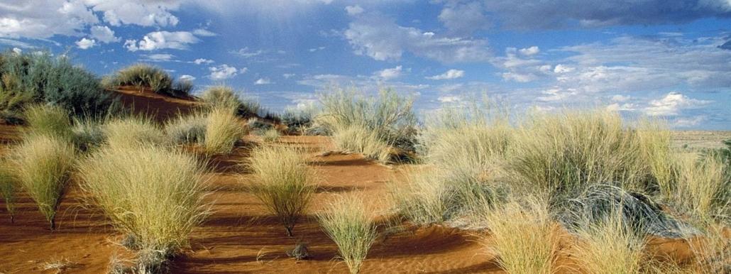 Clumps of light green grass growing from orange sand desert