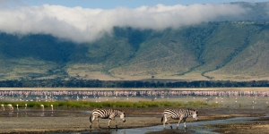 zebras in ngorongoro crater in front of flamingos, with crater wall fare behind