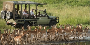 safari truck watching herd of antelope