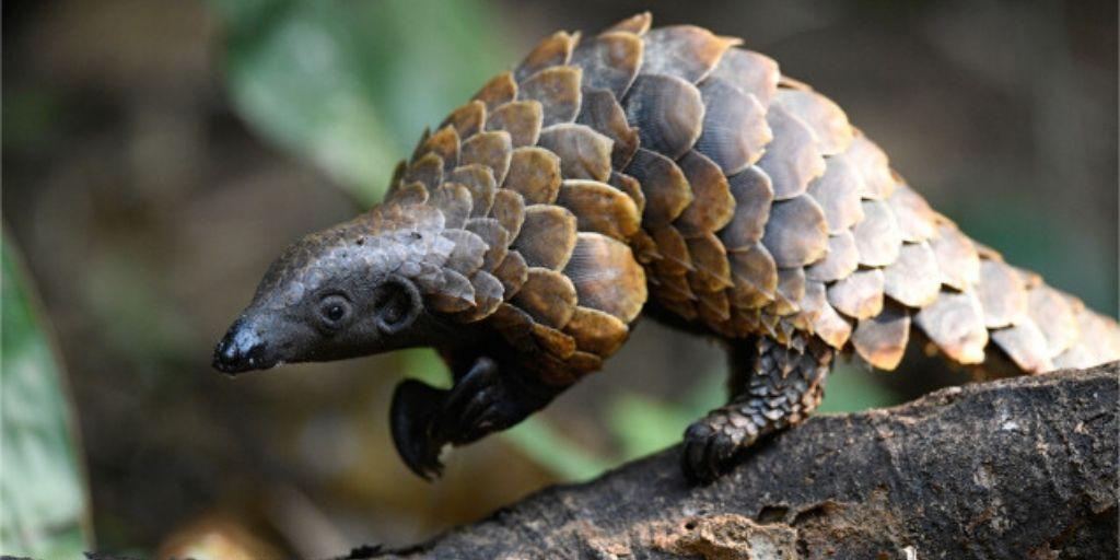 Endangered Animals of Africa 11