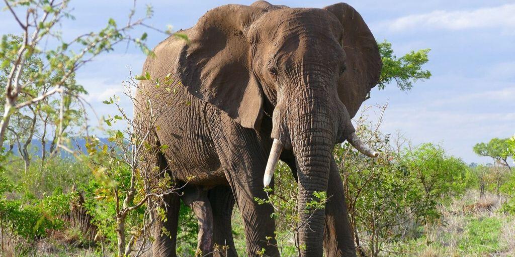 elephant close up on a zimbabwe safari