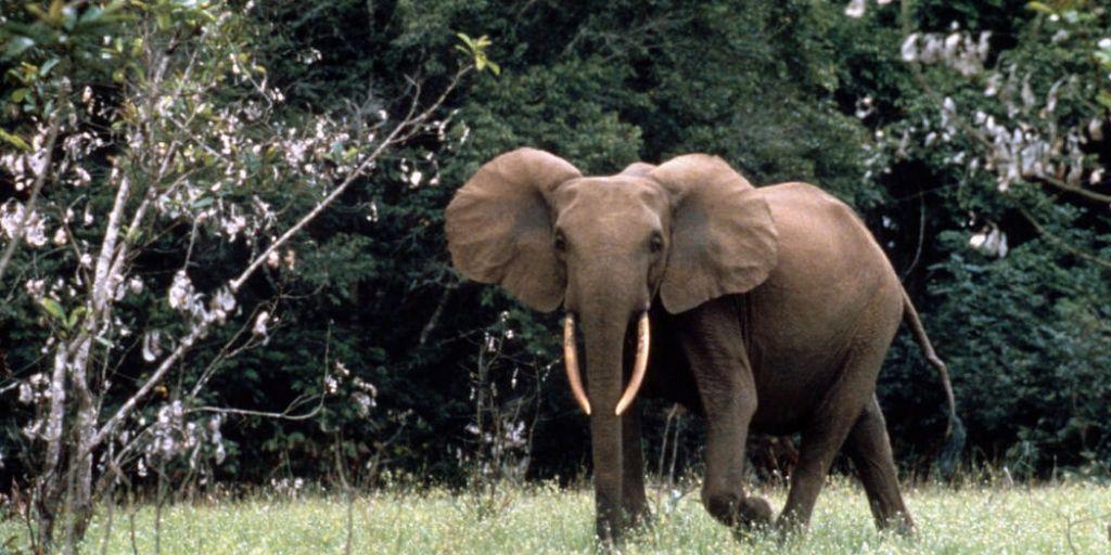 Endangered Animals of Africa 12