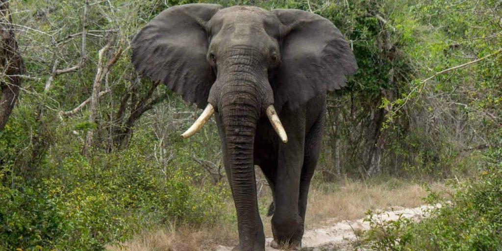 Endangered Animals of Africa 14