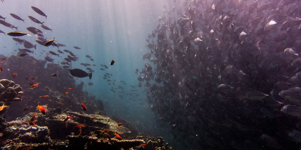 schools of fish and coral wall