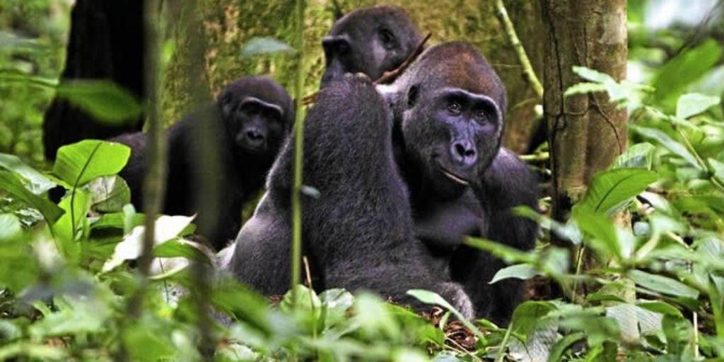 Endangered Animals of Africa 2