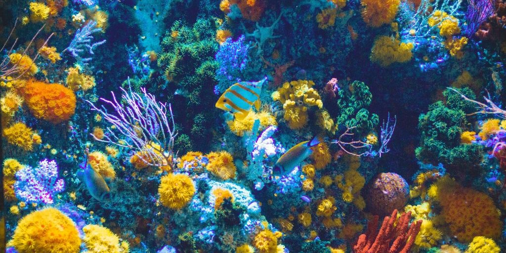 Bright Red Sea coral wall