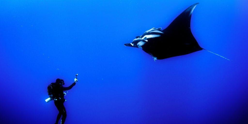 man taking photo of manta ray