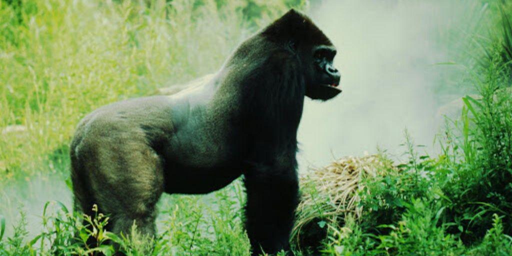 Endangered Animals of Africa 3
