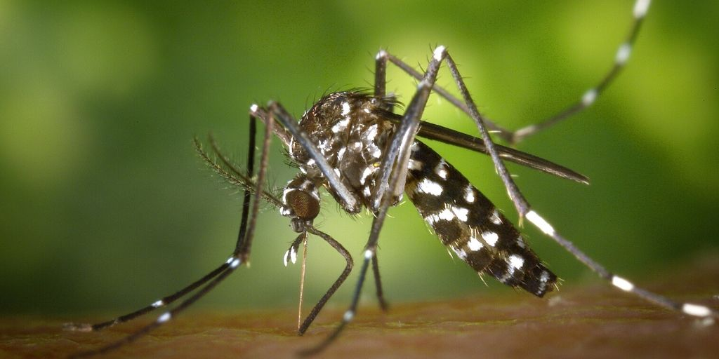mosquito on human skin - most dangerous animal in Africa