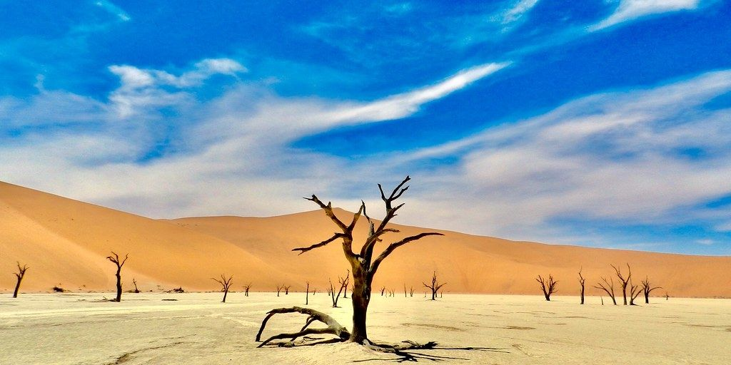 Amonst the most photographed deserts of Africa? Dead tree in parched earth in front of orange sand dune