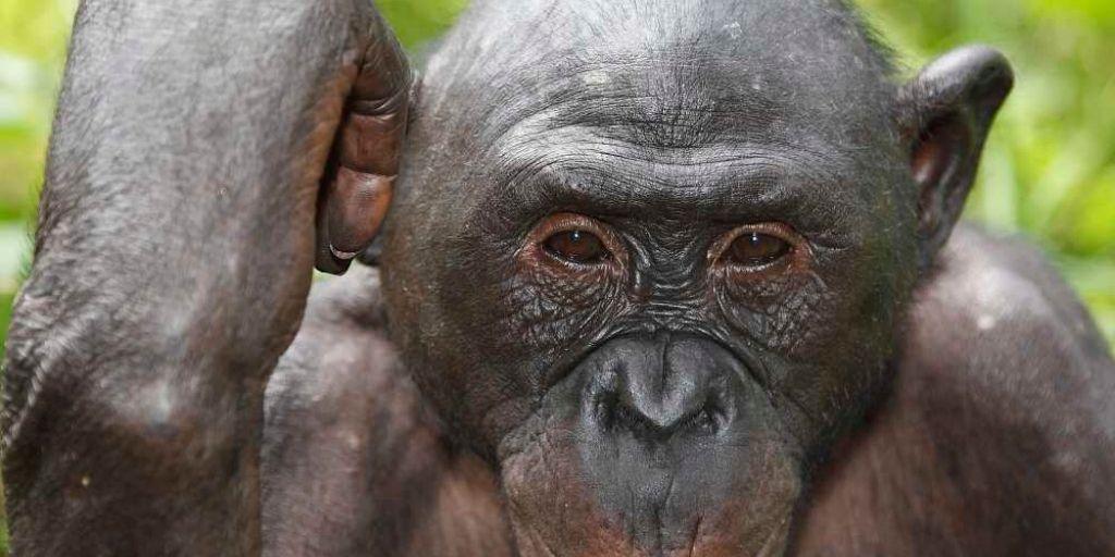 Endangered Animals of Africa 7