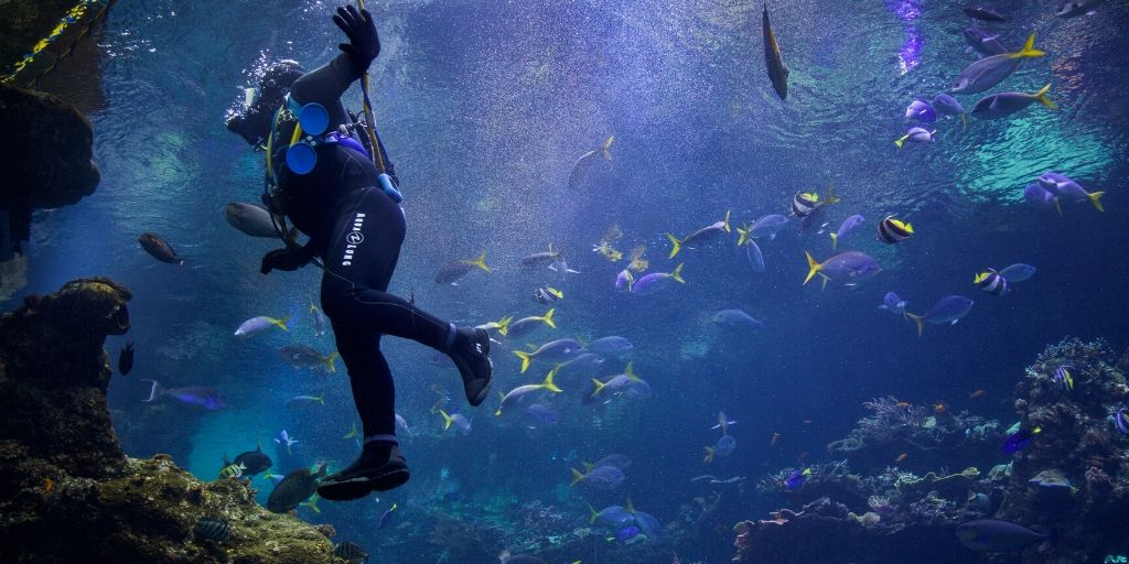 diver in water taking safety stop