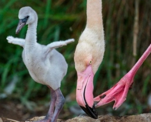 flamingo chick and moths head
