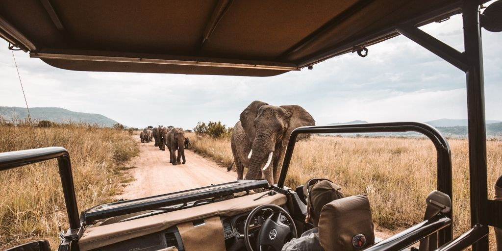 game drive with elephants approaching