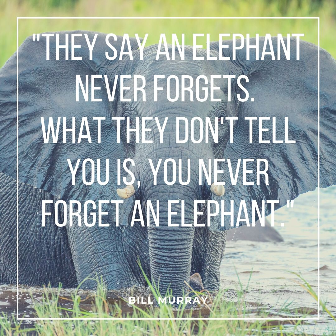 safari quotes on elephant in river backgroud