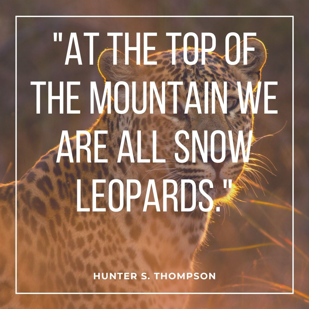 safari quotes on leopards
