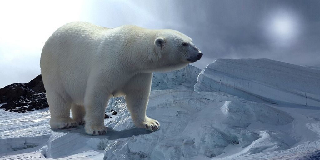 polar bear - one of the largest animals in the world