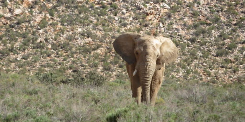 elephant at aquila - big five in south africa!