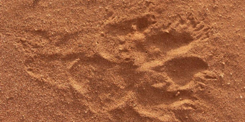 Hyena spoor