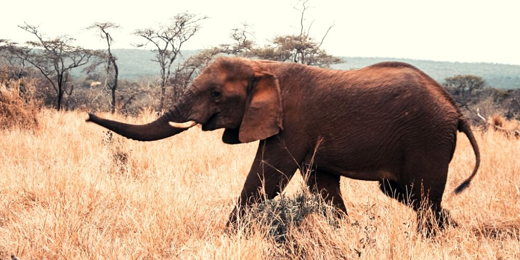 elephant at thanda private game reserve