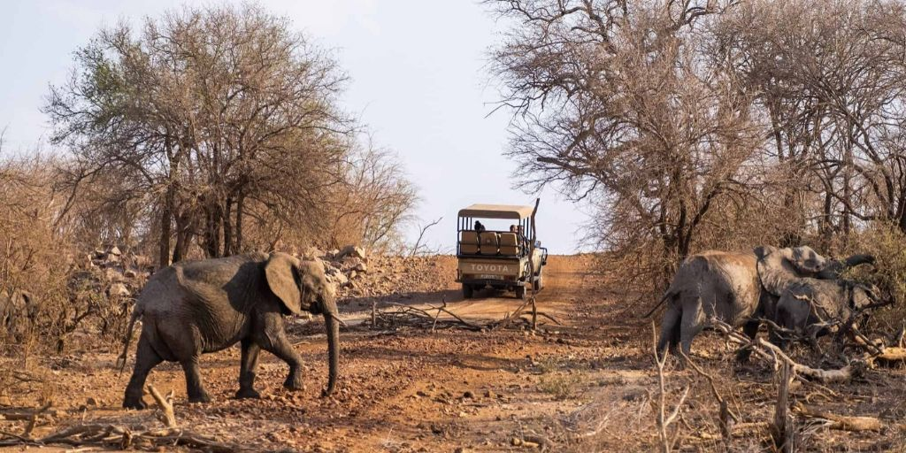 Madiwke game drive with elephants