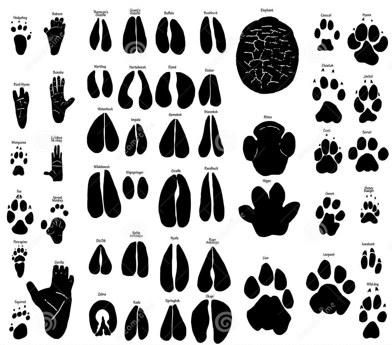 african animal footprints