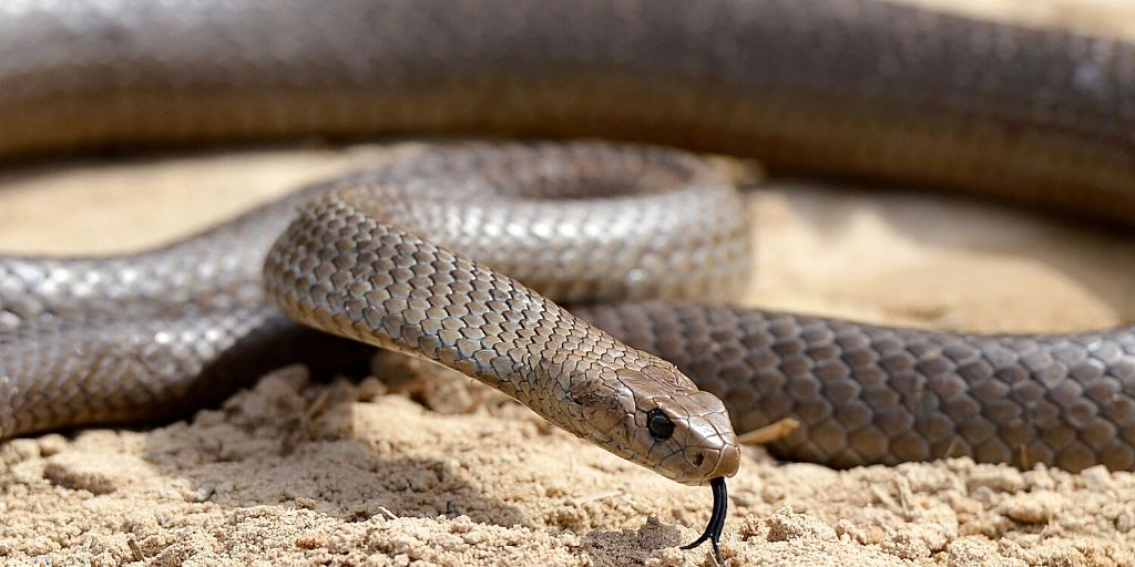 eastern brown snake - 3rd most venomous snake in the world